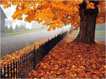 What Fall Means for Eye Health